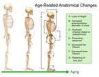 Anatomical Aging Chart