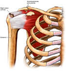 Right Shoulder Injuries