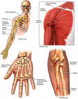 Post-accident Crush Injuries to the Right Shoulder, Arm and Hand