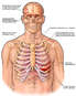 Injuries of the Head, Chest and Shoulder