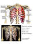 Traumatic Injuries to the Thorax