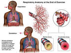 Respiratory Anatomy at the End of Exercise