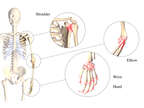 Joints Rarely Affected by Osteoarthritis