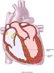 Heart - Cardiac Conduction System Diagram