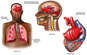 Fatal Head and Chest Injuries