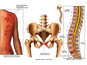 Injuries to the Back, Pelvis and Mid and Lower Spine