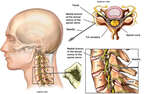 Diagnosis of Facet Joint Pain in the Neck